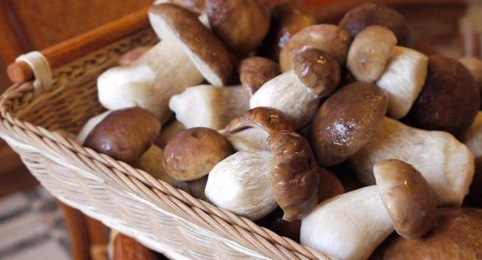 Заготовка свежих грибов на зиму